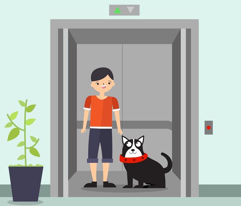 animal em elevador