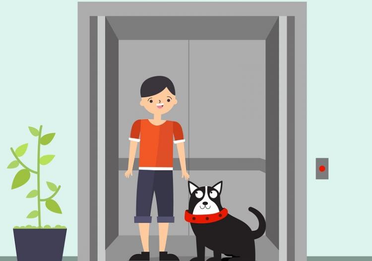 Animais em elevadores – Pode ou não pode?